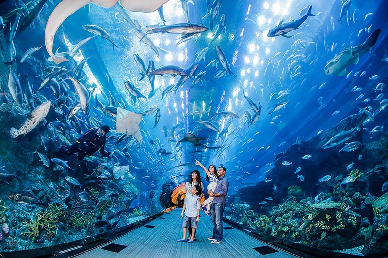 dubai-aquarium-underwater-zoo