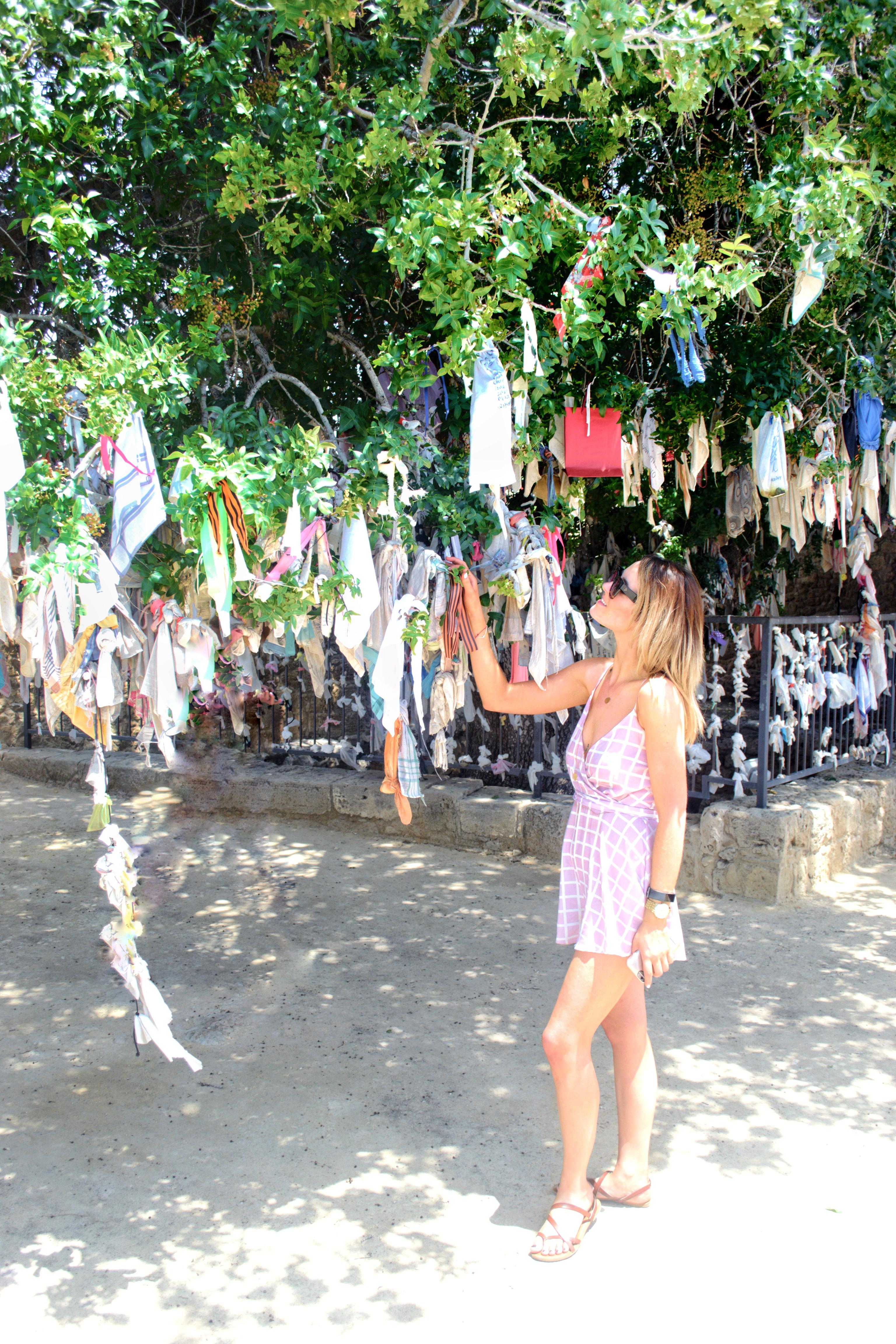 The Hanky Tree Paphos