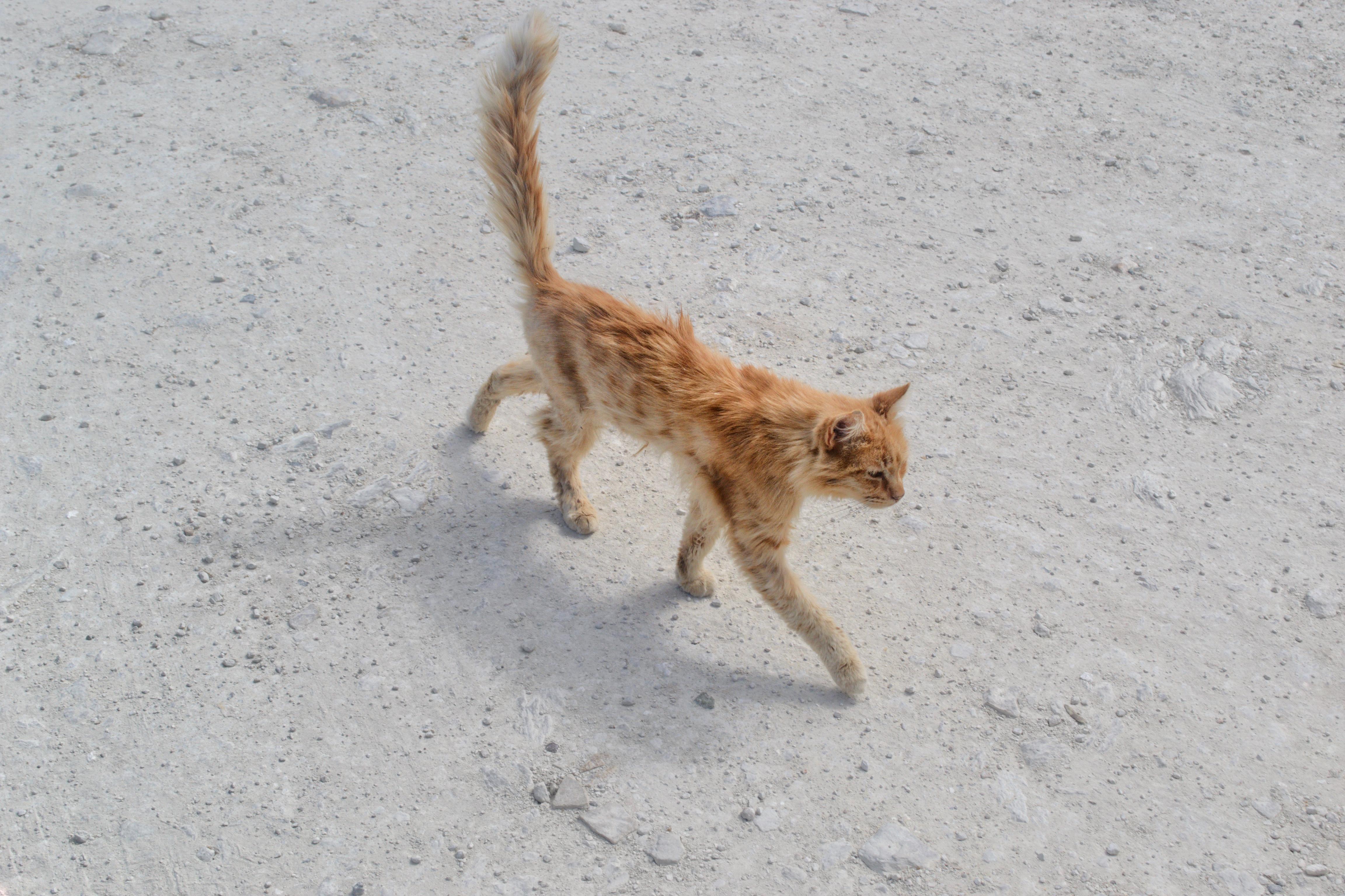 Tala Monastery Cat Park